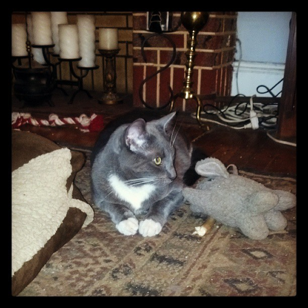Luke the Cat lounges with a stuffed elephant.