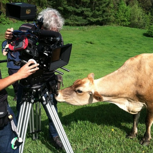 So this is happening now #cows #cowcinematographer #film #farm  (at The Laverys)