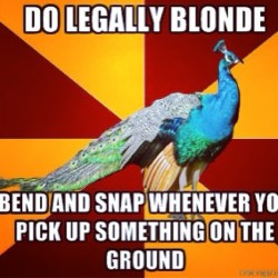 Always  #bendandsnap #legallyblonde