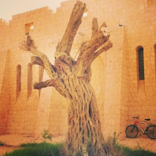 Just #instagram worthy. #alshahaniya #love #tree #museum #life #sheikfaisalbinqassim #althani #qatar #arts #heritage #culture🌳🍃🍂