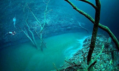 "mariavontraphouse:  rhamphotheca:  underthevastblueseas: Underwater Rivers?  A group of amateur cave explorers discovered a river in Mexico with banks, trees and leaves just like an ordinary river, but with an additional metric shit ton of ""WTF,"" because they were hovering 25 feet over it in scuba gear when they discovered it. While underwater water doesn't seem possible, the ""river"" is actually a briny mix of salt water and hydrogen sulfide. It's much more dense than regular salt water, so it sinks to the bottom and forms a distinct separation that acts and flows like a river. Deep sea lakes look like normal lakes, complete with sandy and rocky shores. Scientist call these lakes ""cold seeps,"" but they're a hotbed for life, because apparently waterfront real estate is a hot commodity under water, too. The ""rocky"" shores are actually made up of hundreds of thousands of mussels. Even weirder, the lakes under the waves have waves of their own. Photos by Anatoly Beloshchin,source,   well that totally explain this"