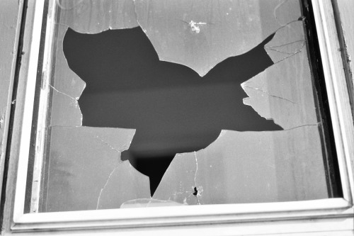 Its a bird, its a bat, its a batman symbol…? Broken glass window looks like the batman symbol to me #EastSideBuffalo nycgoes2bflo—-k.h.photography
