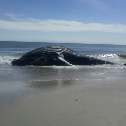 Poor lil guy 🐋 (at Tienna Beach)
