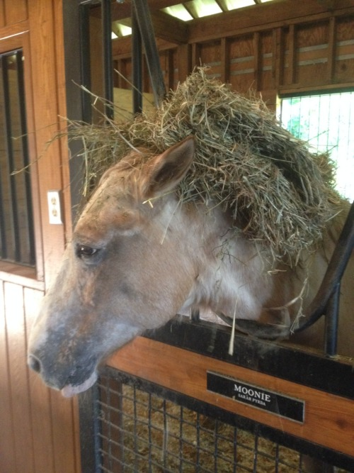 sepyrda:  He REFUSES to move his head for the hay so we met in the middle on the issue
