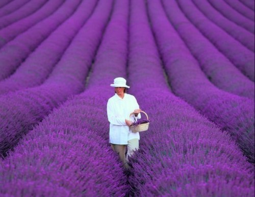 liyahetman:  Provence, France.