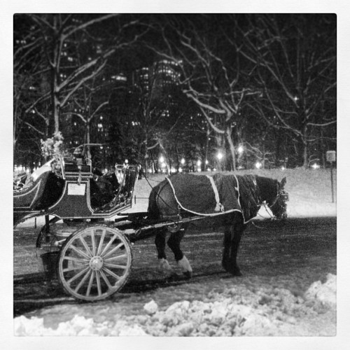 #horse #nemo #snow 🏇⛄❄❤ #nyc #winter #wonderland