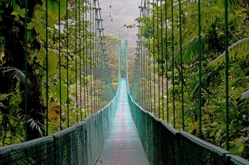 Are you brave enough to cross this hanging bridge in the Costa Rican cloud forest?