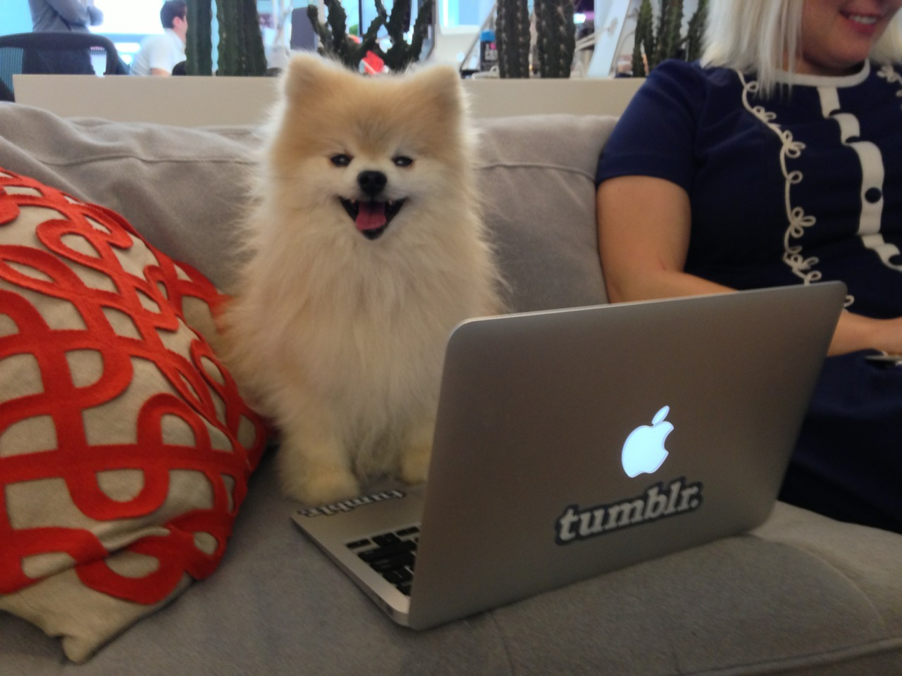 Working at Tumblr HQ!