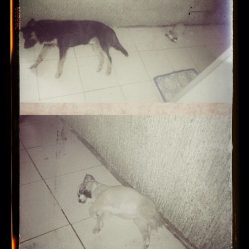 parang scene of the crime — the doggies sleeping 😜👻 haha mewi kwismas!! 🎅🎄🎆