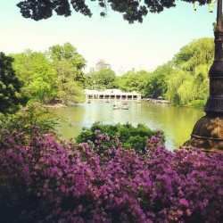 The Boathouse #picturesque #lake #flowers #beautiful #pretty #scenic #instalove #nature #centralpark #simplepleasures #nyc #travelgram #summer  (at Central Park Boathouse)