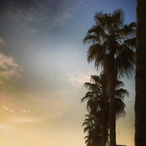 #sunset #palms