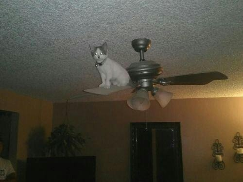 getoutoftherecat:  get down from there cat. you won't keep me cool when it gets hot. also you might not be happy when i turn it on.