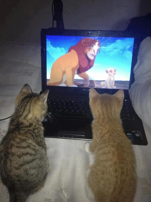 Watching their favorite movie [via]