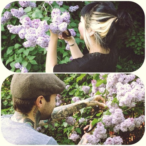thickskinn:  ngoctruong:  Picked lilacs to put in the house. They smell wonderful!  Cutest couple ever!