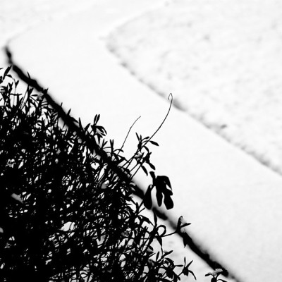A Tiny Path through the Snow #SLR #dslr #canon #canonT1i #snow #winter #snowy #path #silhouette #love #instagood #photooftheday #nj