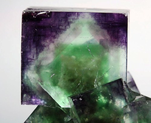 bijoux-et-mineraux:  Fluorite with Green and Purple Phantoms