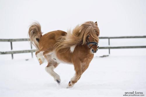 equuslove:  Weee! Via proudfocus.com Please follow this blog! Thank you so much! I <3 you!