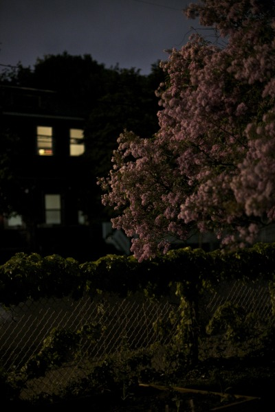somervillebynight:  Highland Ave, Somerville, MA
