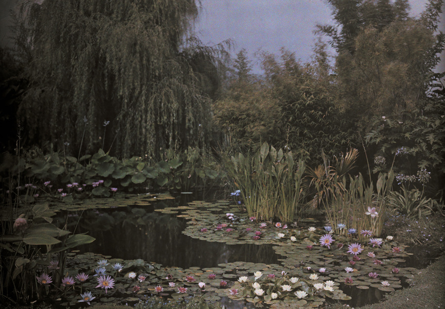 arbolae:  Undated autochrome of a water lily garden. Photograph by Franklin Price Knott, National Geographic