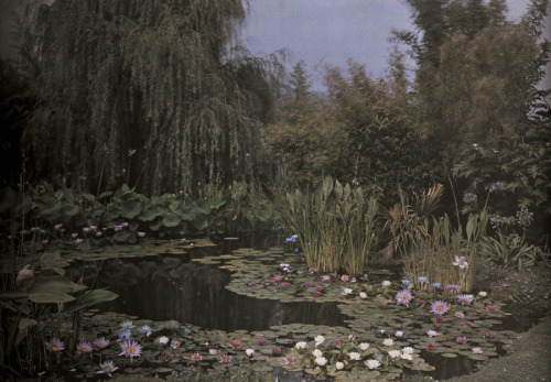 natgeofound:  Undated autochrome of a water lily garden.Photograph by Franklin Price Knott, National Geographic