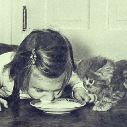 So cute! I think this little girl try to show kitten how to drink the milk. :)