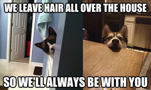 tastefullyoffensive:  Overly Attached Pets[via]