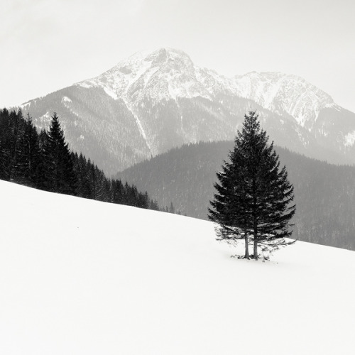 definitelydope:  Tatra Mountains