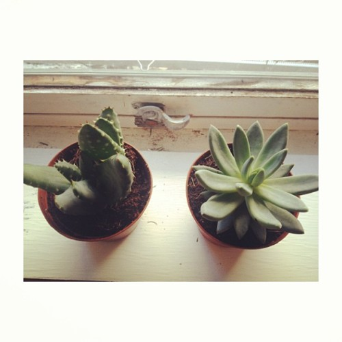 19-93:  Succulent friends for Summer 🌱🌵