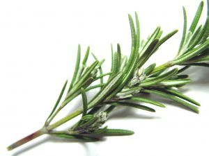 There's ROSEMARY … that's for remembrance.