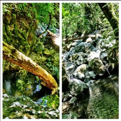 Hike today with @_ilovedirt_ and Brenda thru the creek. We climbed the fallen tree. #nature #hiking #creek #water #boulders #trees #vine #bugs #babywaterfalls