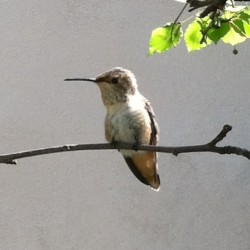 my new buddy #hummingbird #socool #tiny #cute ##beautiful #beauty #instagood #instadaily #picoftheday #photooftheday #nature