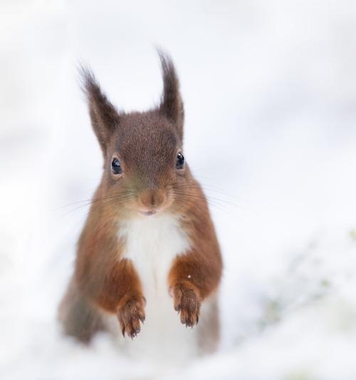 Squirrel in white! by © Sue Demetriou