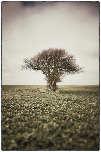 My friend the treeA tree in a field. Taken in a field, somewhere in the Kent countryside.View Post