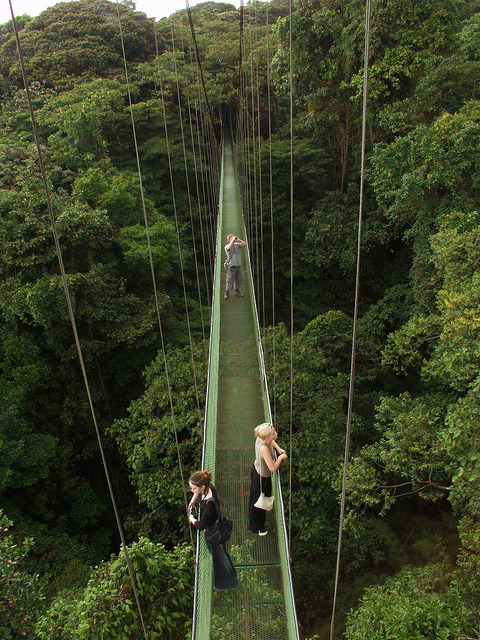 visitheworld:  Canopy walkways above the Monteverde Rainforest, Costa Rica (by Exodus Travels).  I miss being there! ;w;