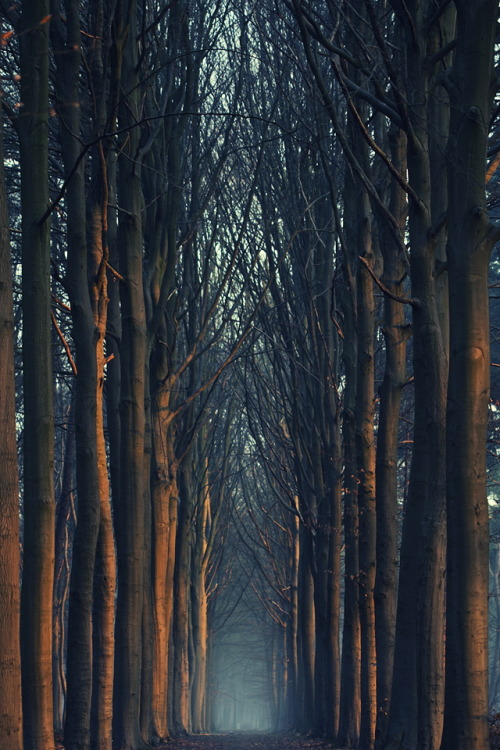 keepcalmandlovemyblog:   Perfect Walk  TumbleOn)