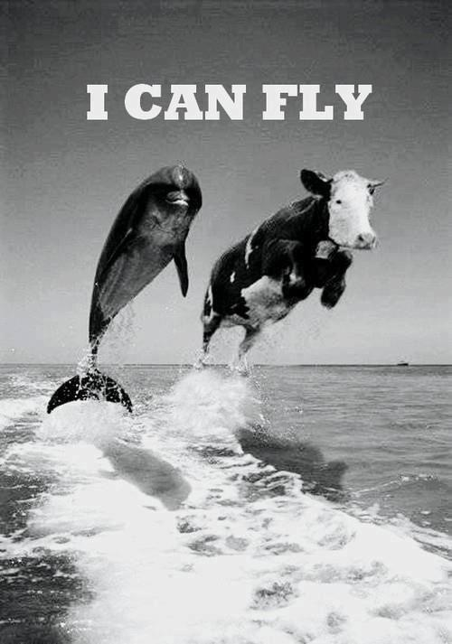xojellyfishxo:  Fly | via Facebook on We Heart It. http://weheartit.com/entry/61590112/via/the_wanderlust