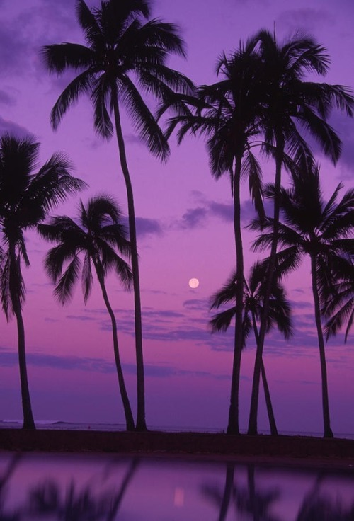 Palm Tree And Moon, (by Ron Dahlquist)