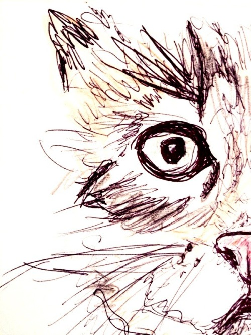inhalexpression:  scribble the cat