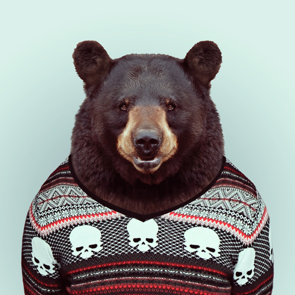 zooportraits:  BEAR by Yago Partal for ZOO PORTRAITS
