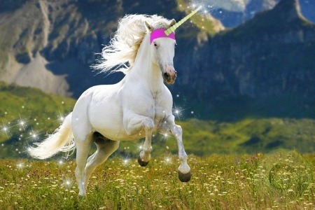 Malaysian Groupon for unicorn rides       via groupon.my     .
