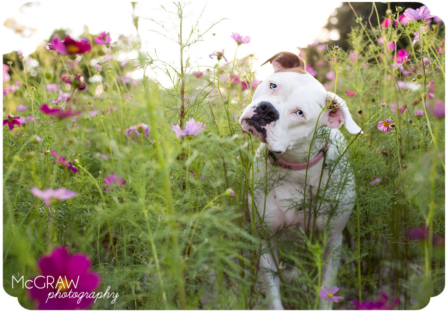 McGraw Photography Blog » Charlotte, NC | Pet  on We Heart It - http://weheartit.com/entry/61897251/via/mlhall   Hearted from: http://www.mcgrawphotographyblog.com/page/15/