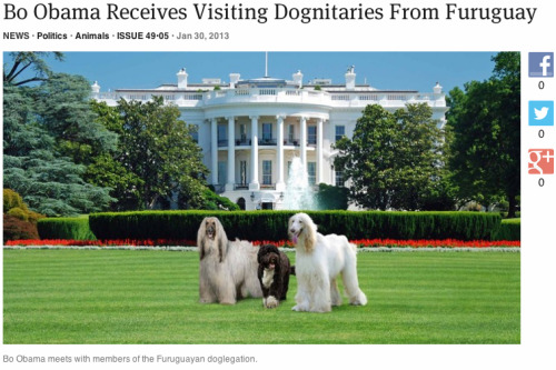Bo Obama Receives Visiting Dognitaries From Furuguay: Full Story