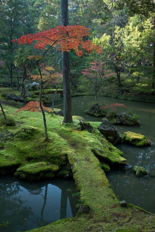 Moss Bridge, Kyoto, Japan photo via persequens