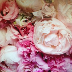 Oh to be bought flowers #peony #inspiration