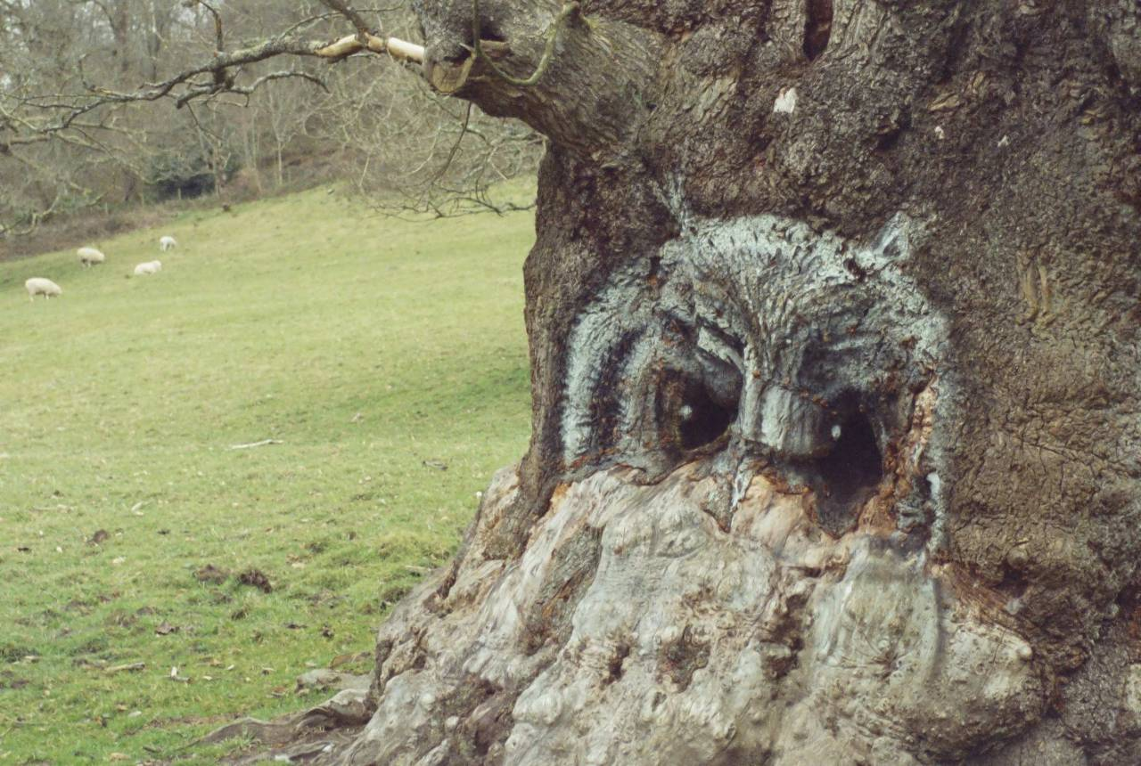 Owl in a tree.