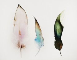 sutakimu-catching-souls-flights:  Watercolor feathers  b-e-a-utiful!