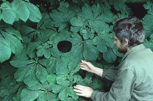 phoebe-bird:free-parking:Andy Goldsworthy, progress shots, 1984-1986Andy, my dream guy.