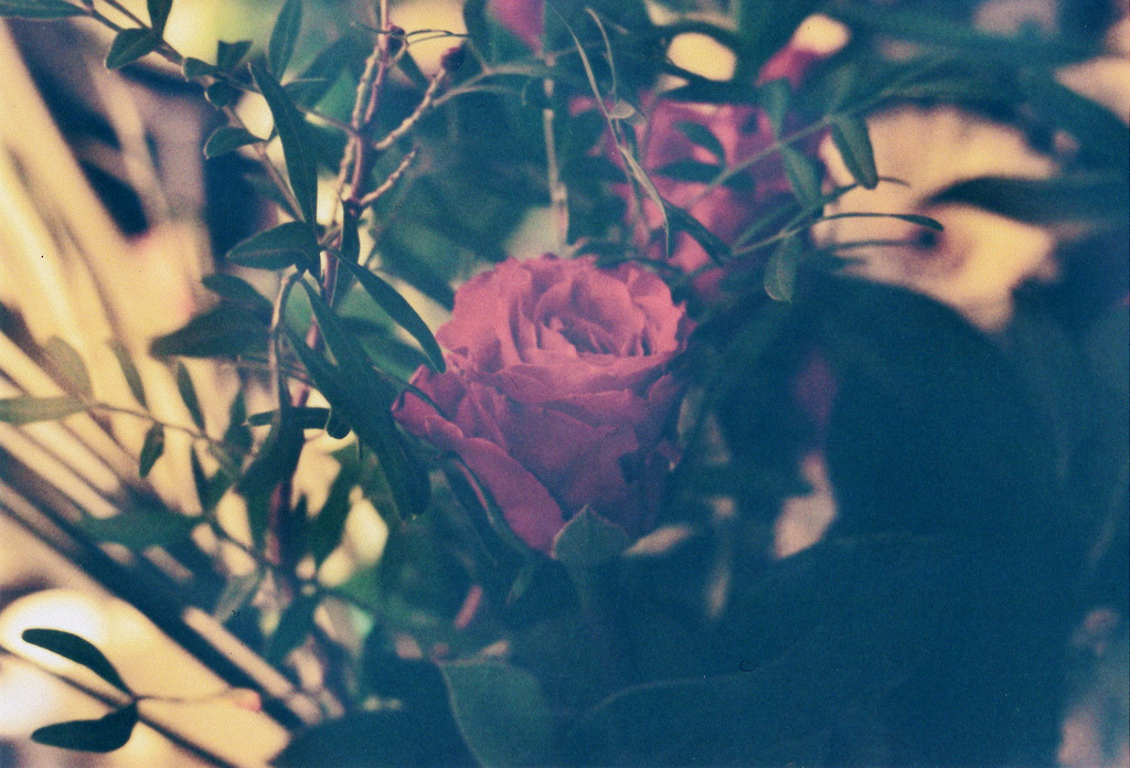 the first time i got roses from a guy (by anne mumford)