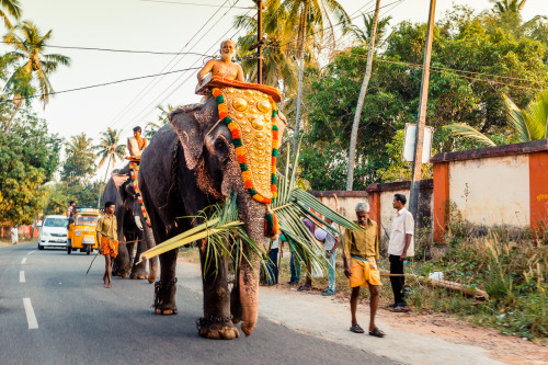 rucksackandacamera:   One of dozens of elephants constantly travelling from one festival to the next, causing the already haphazard traffic to slow down even more.