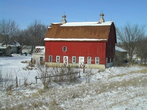scinerds:  Barns Are Painted Red Because of the Physics of Dying Stars  Have you ever noticed that almost every barn you have ever seen is red? There's a reason for that, and it has to do with the chemistry of dying stars. Seriously. Yonatan Zunger is a Google employee who decided to explain this phenomenon on Google+ recently. The simple answer to why barns are painted red is because red paint is cheap. The cheapest paint there is, in fact. But the reason it's so cheap? Well, that's the interesting part. Red ochre—Fe2O3—is a simple compound of iron and oxygen that absorbs yellow, green and blue light and appears red. It's what makes red paint red. It's really cheap because it's really plentiful. And it's really plentiful because of nuclear fusion in dying stars. Zunger explains:  The only thing holding the star up was the energy of the fusion reactions, so as power levels go down, the star starts to shrink. And as it shrinks, the pressure goes up, and the temperature goes up, until suddenly it hits a temperature where a new reaction can get started. These new reactions give it a big burst of energy, but start to form heavier elements still, and so the cycle gradually repeats, with the star reacting further and further up the periodic table, producing more and more heavy elements as it goes. Until it hits 56. At that point, the reactions simply stop producing energy at all; the star shuts down and collapses without stopping.  As soon as the star hits the 56 nucleon (total number of protons and neutrons in the nucleus) cutoff, it falls apart. It doesn't make anything heavier than 56. What does this have to do with red paint? Because the star stops at 56, it winds up making a ton of things with 56 neucleons. It makes more 56 nucleon containing things than anything else (aside from the super light stuff in the star that is too light to fuse). The element that has 56 protons and neutrons in its nucleus in its stable state? Iron. The stuff that makes red paint. And that, Zunger explains, is how the death of a star determines what color barns are painted.